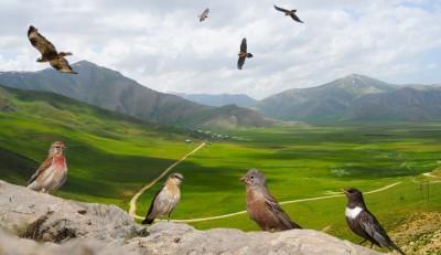 Kaybolan Kayalık ve Kuşları