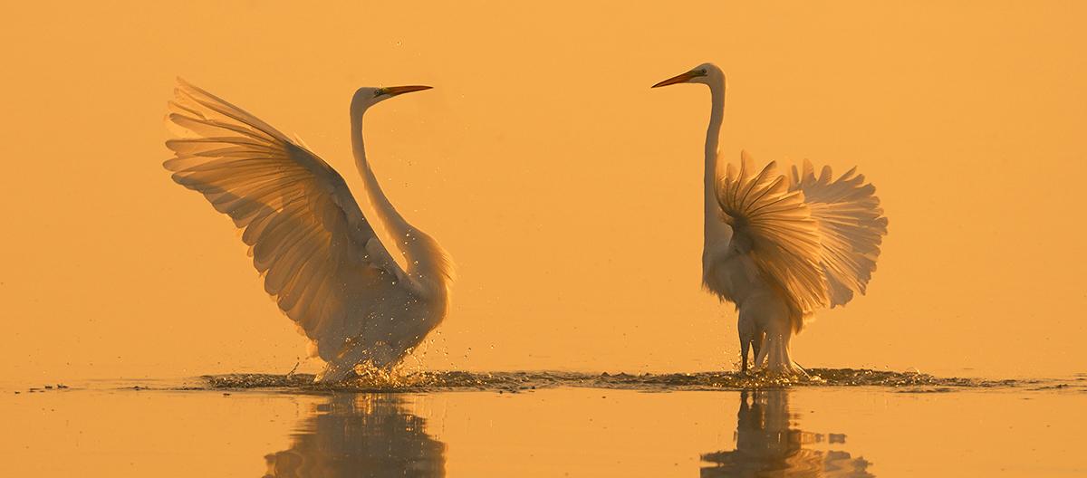 manyas kuş cenneti ile ilgili görsel sonucu